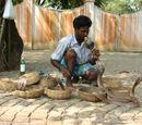 India/Miscellaneous