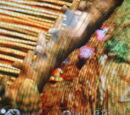 Glitch images