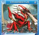 Crawsectus