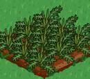 4 day grow