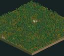 Fungus Woods