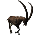 Apline Ibex (Male).png