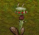 Thorny Wanderleaf