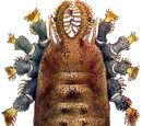 Dicranolasmatidae