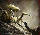 Aranha das cavernas