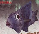 Pucka