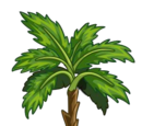 Bahri Date Tree