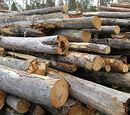 Boyd Logging Company