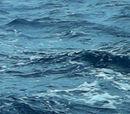 Sea or ocean habitat