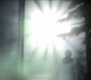 The Light Presence