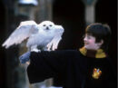 Harry hedwige 2.jpg