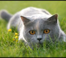 Dovewing