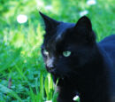 Crowfeather