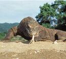 Bengal Tiger vs Komodo dragon