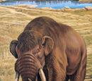DW: Mastodon