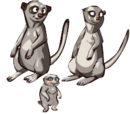 Bill the Meerkat