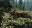 Fuchs (Skyrim)