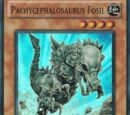 Pachycephalosaurus Fósil
