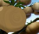 Chocolatomato