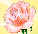 Rose Meat