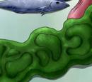 Kelp Steak