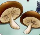 Mist Shitake Mushrooms