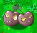 Sun Cherry Bomb