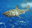 Saltwater Crocodile vs. Great White Shark