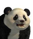 2165245-portrait panda.jpg