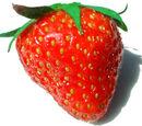 Accessory Fruit