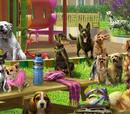 Dog Park (Scene)