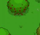 1st Island Secret Bonus Areas