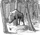 Мифология американских колонистов