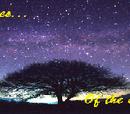 The Starlit Skies