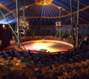 A day in the circus