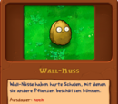 Wall-Nuss