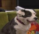 Lady (Dog)