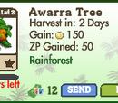 Awarra Tree