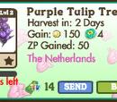 Purple Tulip Tree