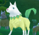 Willow Wolf King