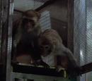 Alvin and Theodore