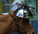 Laboratory Cow