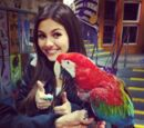 Larry (bird)