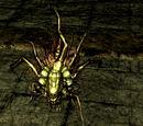 Chaos Bug