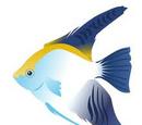 Ocean Creatures & More Wiki
