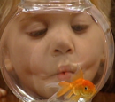 Martin the Goldfish