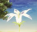 Цветок Пневмы