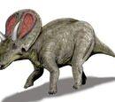 Ceratopsia