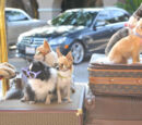 Beverly Hills Chihuahua characters
