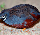 List of birds of India